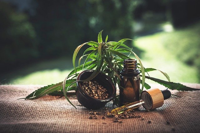 Samen und Blätter der Hanfpflanze