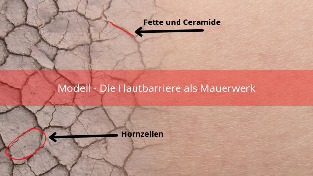 Hautbarriere stärken - Darstellung als Mauerwerk.