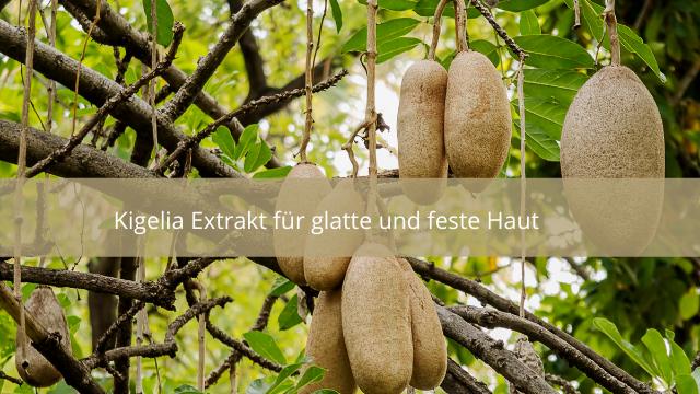 Anti-Aging Wirkstoff Kigelia Extrakt.